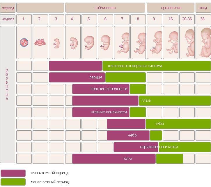 Рассчитать срок беременности: калькулятор, как определить даты по дням и вести календарь по неделям?