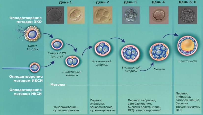 Как происходит замораживание эмбрионов?