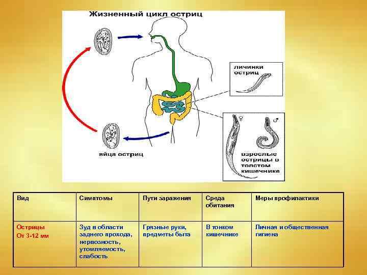 Аскаридоз - симптомы болезни, профилактика и лечение аскаридоза, причины заболевания и его диагностика на eurolab