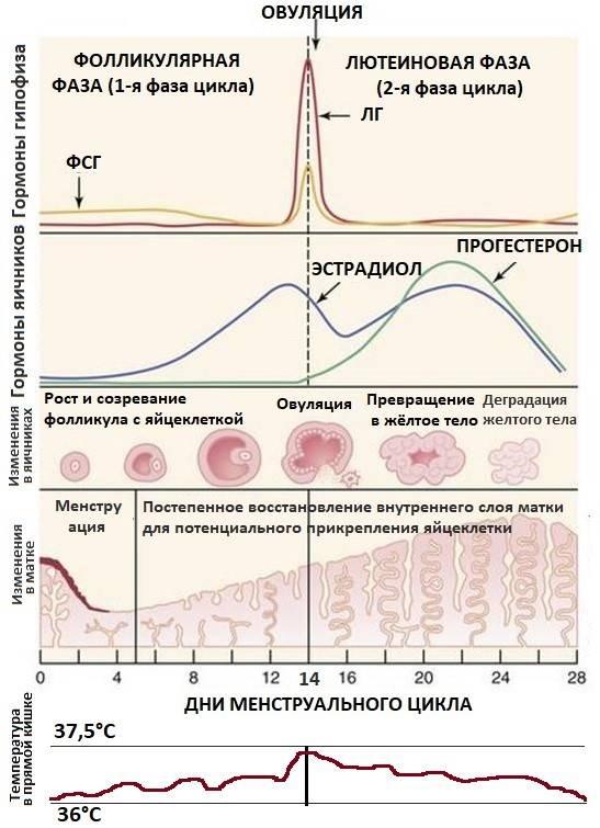 Низкий прогестерон в лютеиновой фазе