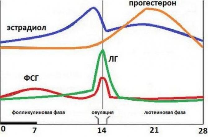 Что означает высокий прогестерон в лютеиновой фазе?