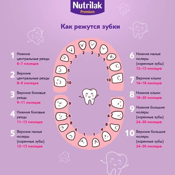 Первые зубы у младенцев: когда они начинают резаться, в каком возрасте? | spacream.ru