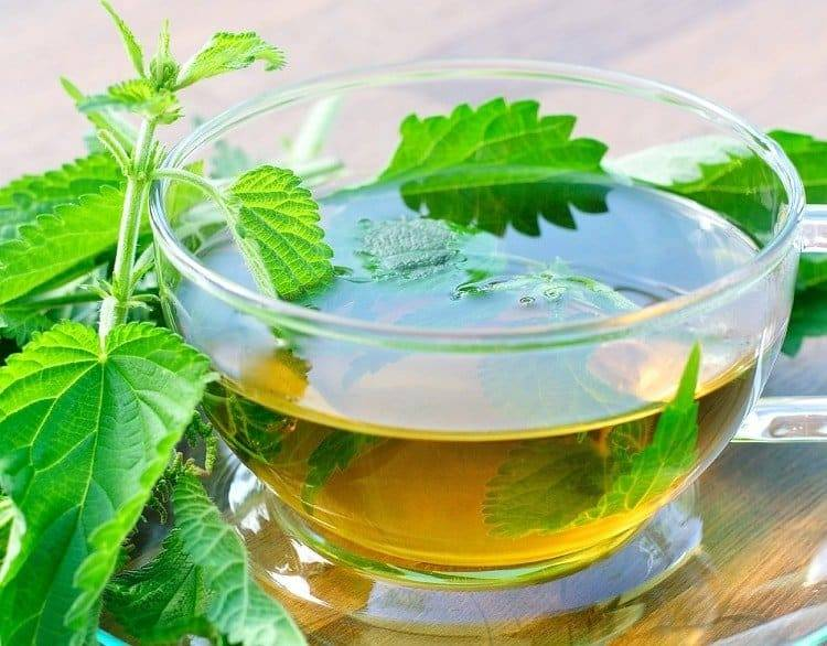 Лечение псориаза травами   компетентно о здоровье на ilive