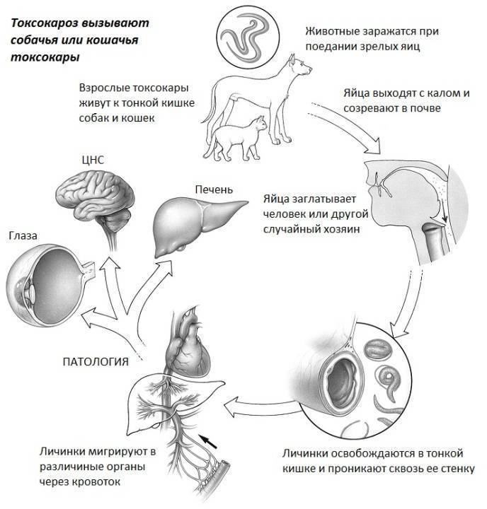 Лечение токсоплазмоза
