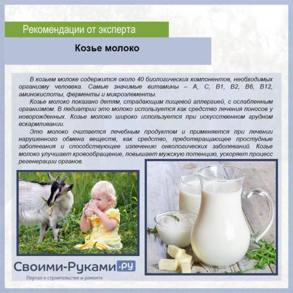 Козье молока для грудничка: с какого возраста можно давать и как?