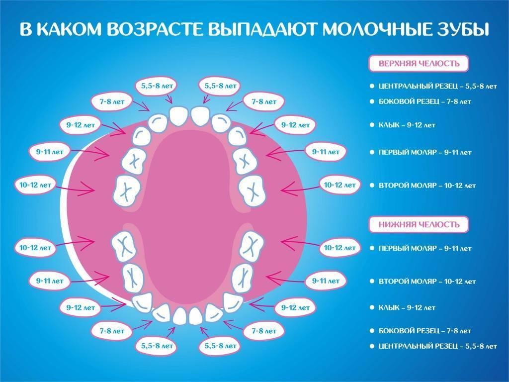 Нумерация зубов в стоматологии