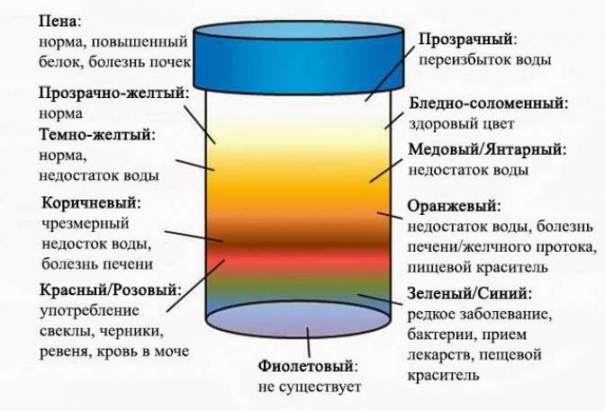 Ярко-желтая моча у ребенка: норма, причины, рекомендации   pro-md.ru