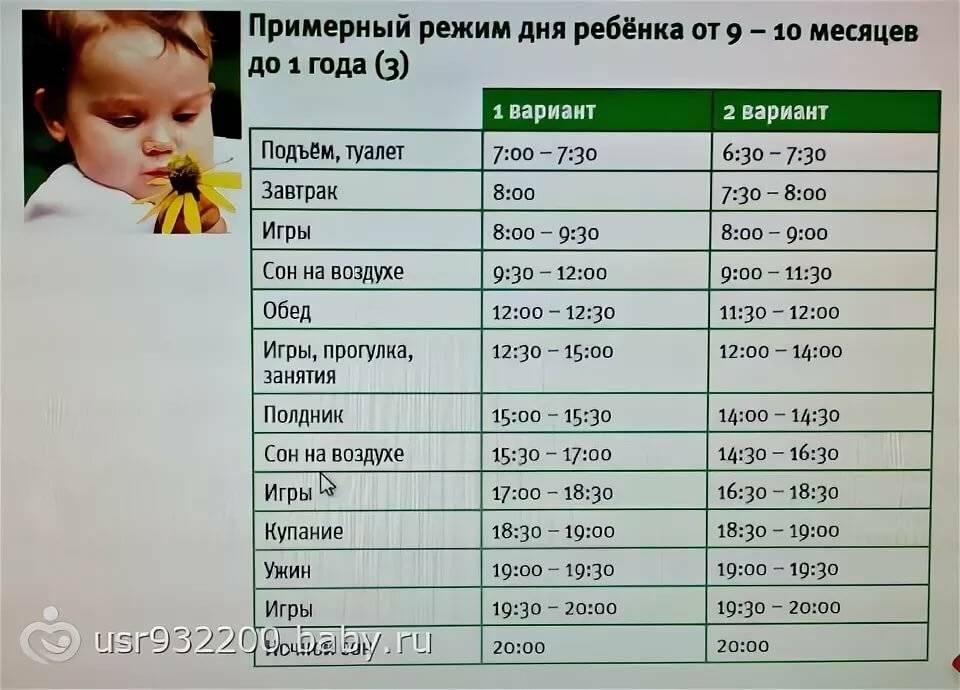 Режим дня ребенка в 11 месяцев: примерный распорядок, график кормления и нормы сна