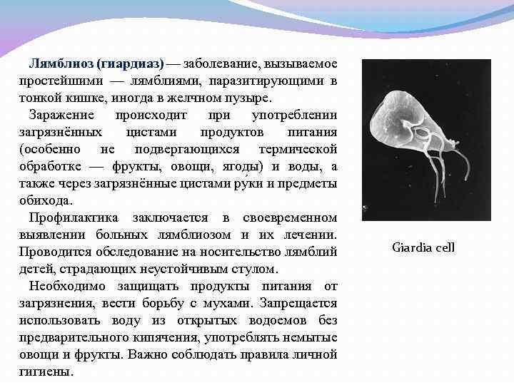 Причины лямблиоза | компетентно о здоровье на ilive