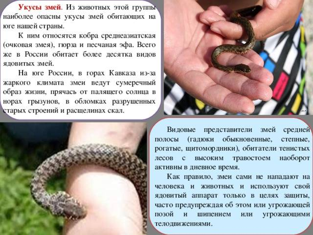 Как определить и лечить укусы змей