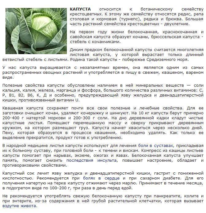 Лечение тромбофлебита народными средствами | компетентно о здоровье на ilive