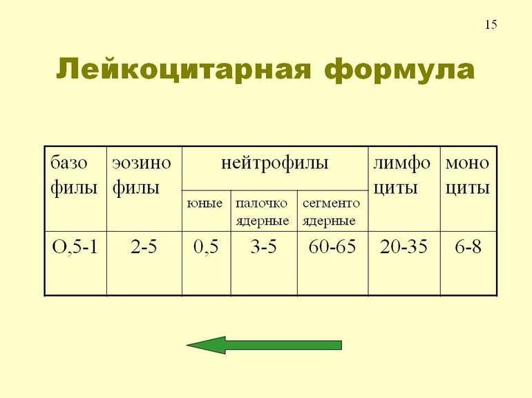 Лейкоцитарная формула крови: расшифровка у детей, норма в таблице по возрасту