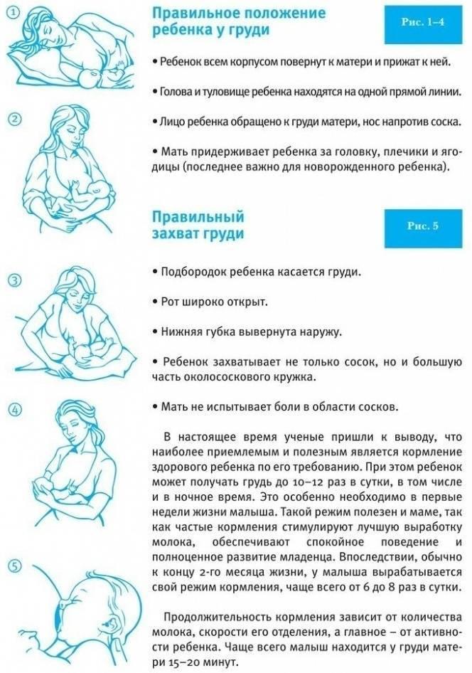 Правильное прикладывание малыша к груди: как должен питаться ребенок