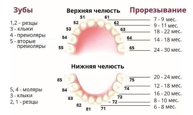 В каком возрасте и в каком порядке выпадают молочные зубы у детей?