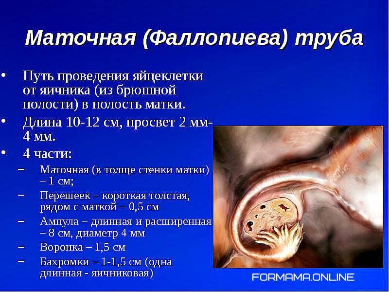 Беременность после перевязки маточных труб