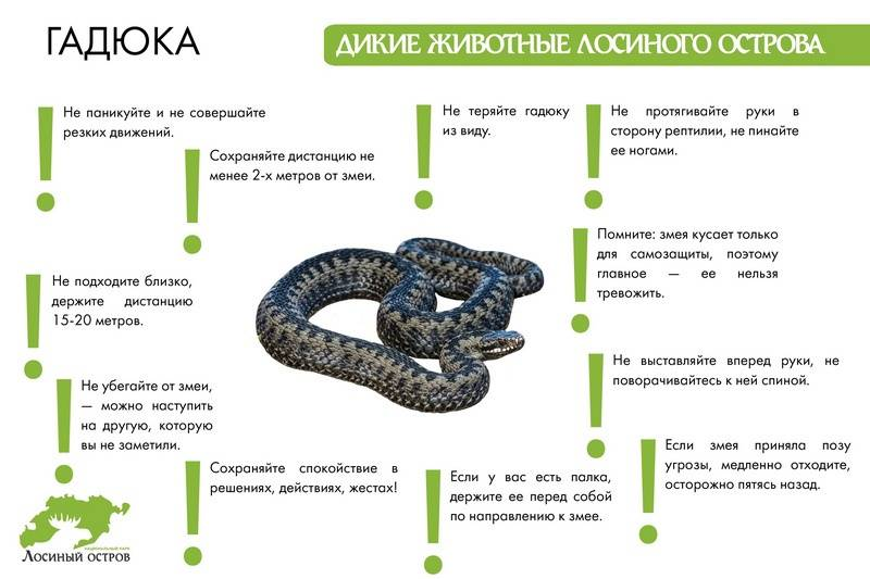 Как оказать первую помощь при укусах змей и насекомых?