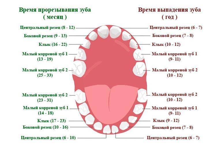 Время прорезывания зубов