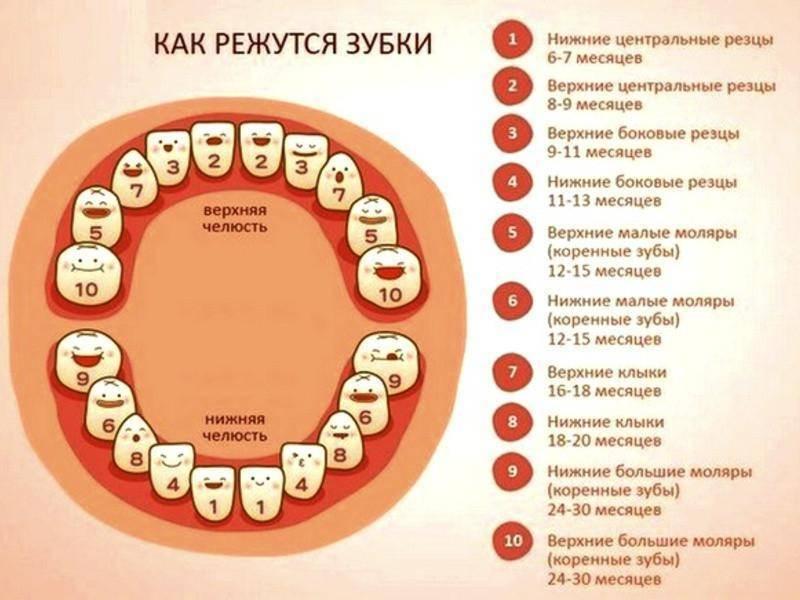 Порядок прорезывания зубов у детей, сроки прорезывания молочных зубов   colgate