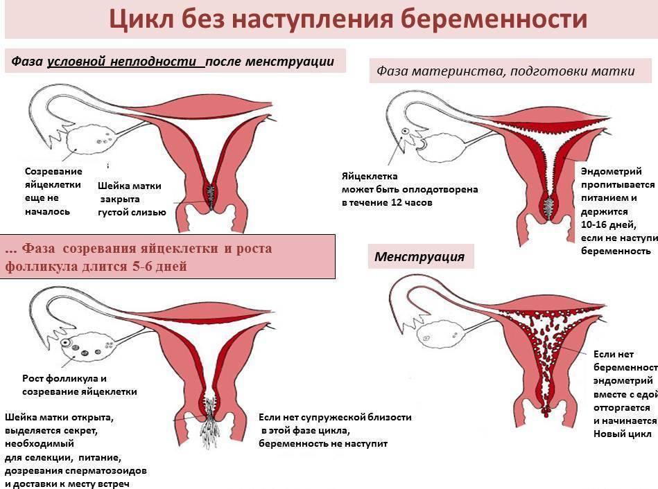 Симптомы болезни - боли внизу живота при беременности
