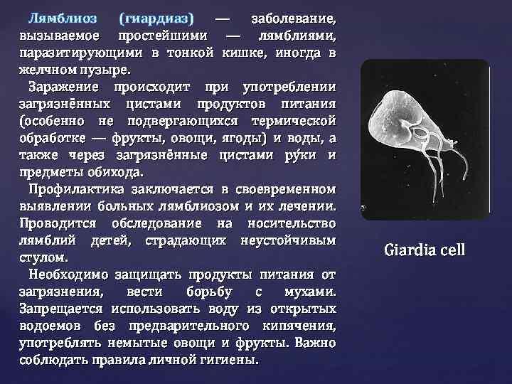 Антитела к лямблиям iga,igm,lgg, giardia lamblia iga,igm,igg колич.