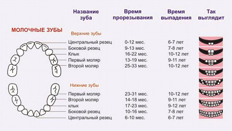 Выпадение молочных зубов у детей: когда у детей выпадают молочные зубы, что нужно делать