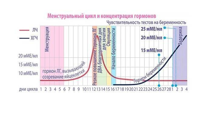 Что такое эко икси/ имси и в каких случаях данные процедуры могут иметь эффективность: стоимость эко икси/ имси