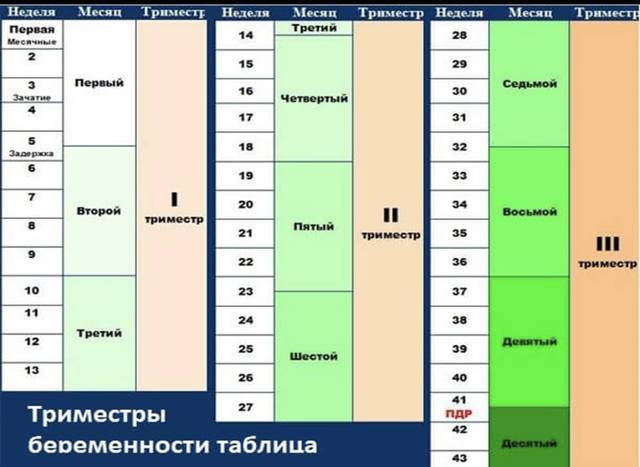 Калькулятор беременности и календарь - срок беременности