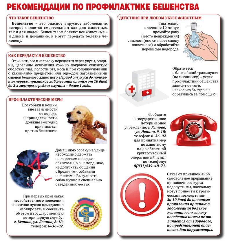 Первая помощь собакам в экстренных ситуациях