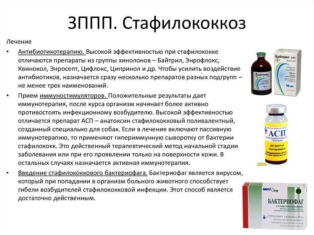 Здоровому человеку стафилококк не страшен! | поликлиника 6