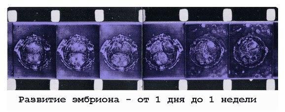 Имплантация эмбриона после эко. признаки и правила поведения