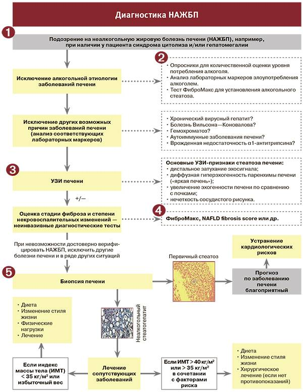 Новообразования печени. диагностика и лечение