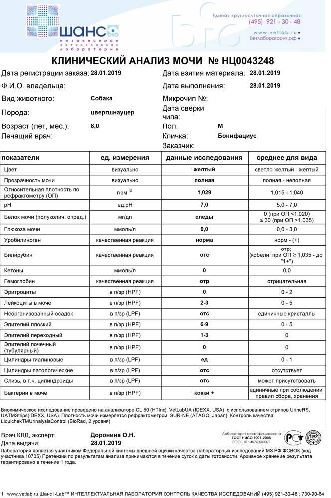 Общий анализ мочи: расшифровка результатов и показатели нормы