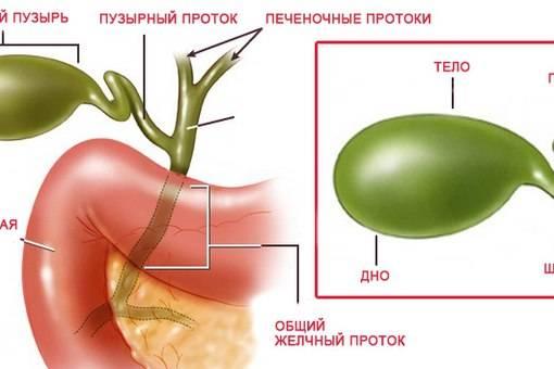 Деформация желчного пузыря - что это такое, лечение деформированного органа, симптомы перегиба в теле