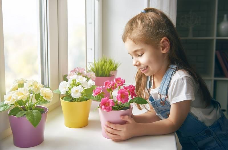 Как выбрать комнатные цветы для детской комнаты