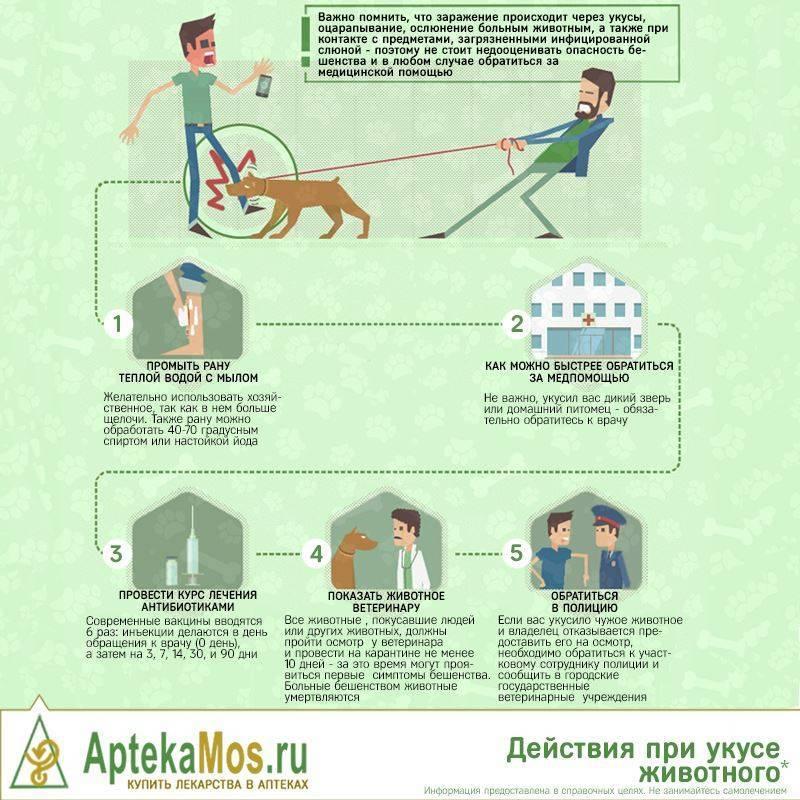 Первая помощь собакам в экстренных ситуациях - собаки