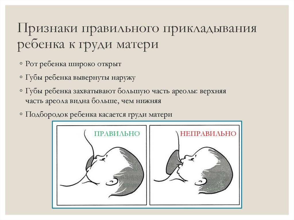 Значение раннего прикладывания ребёнка к груди | педиатрия и неонатология