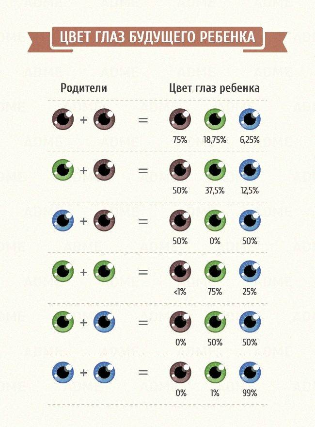 Когда у новорожденных меняется цвет глаз: почему и до какого возраста, когда формируется