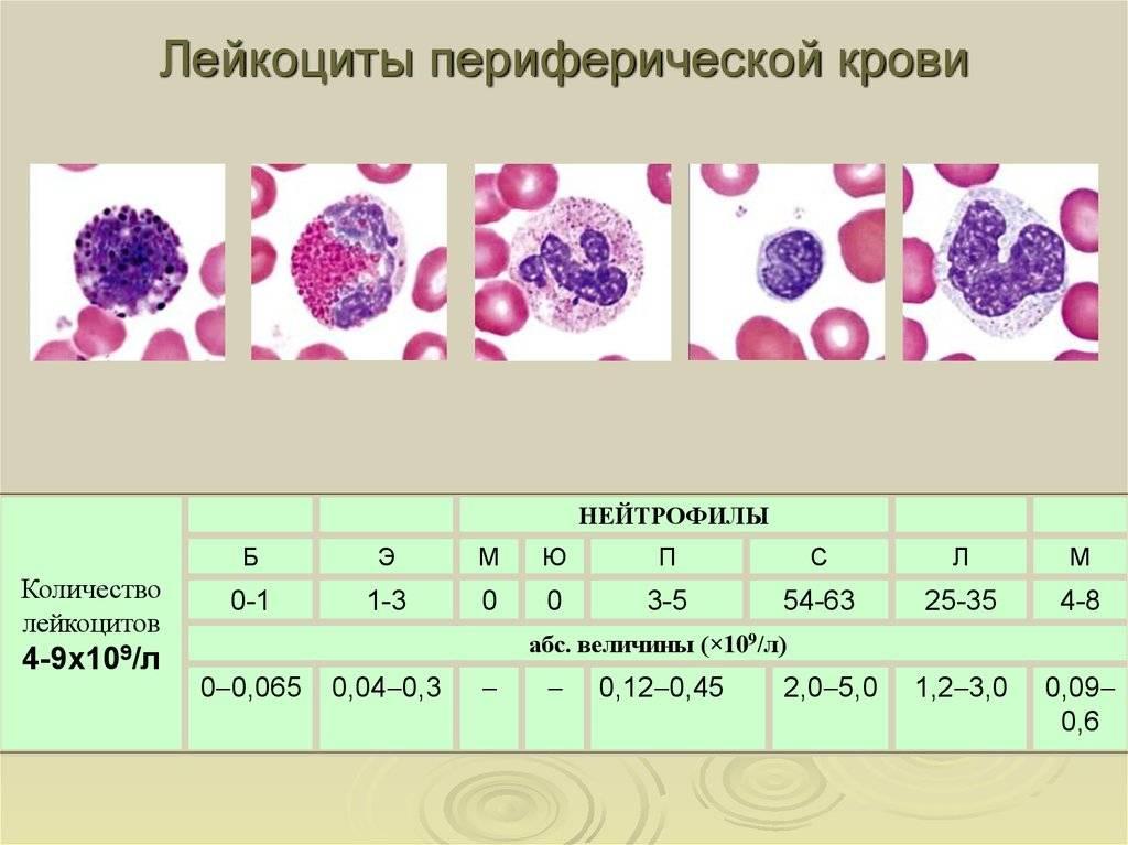 Анализ крови после химиотерапии: норма, расшифровка, общий анализ крови
