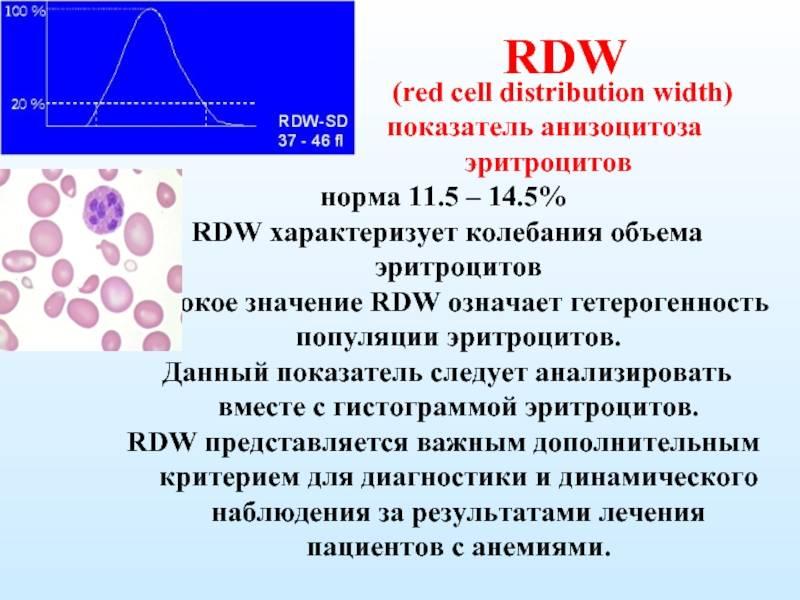 Анализ крови rdw