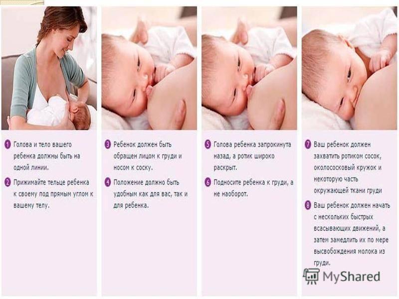 Как правильно кормить грудничка | блог дочки-сыночки