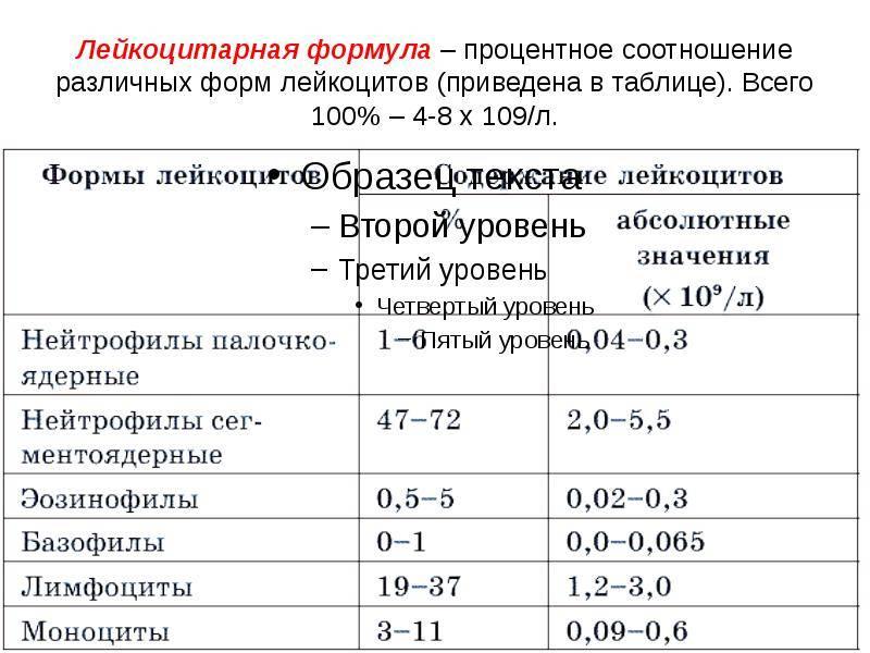 Расшифровка лейкоцитарной формулы крови у взрослых и детей