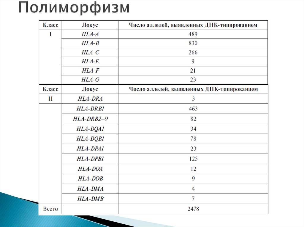 Анализ на hla-типирование и его значение