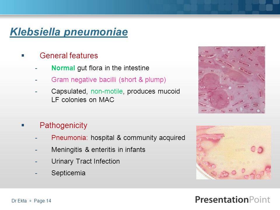 Что такое клебсиелла пневмония