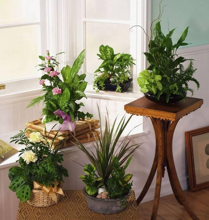 Выбор растений для детской комнаты