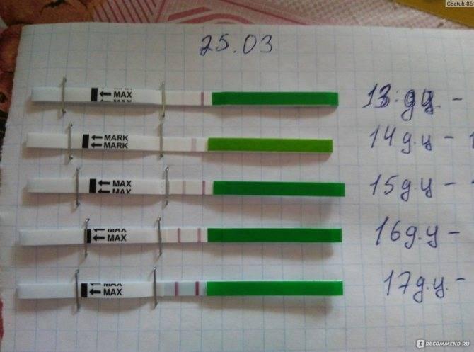 Может ли тест на овуляцию показать беременность?