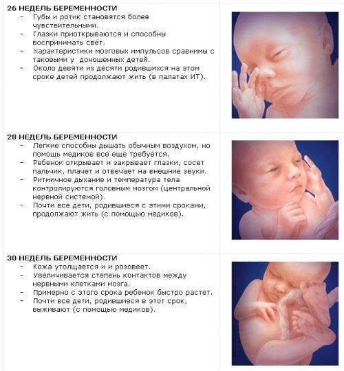 Сроки родов у первородящих