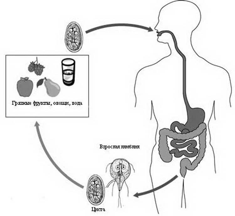 Кандидоз: лечение у женщин, мужчин и детей. симптомы