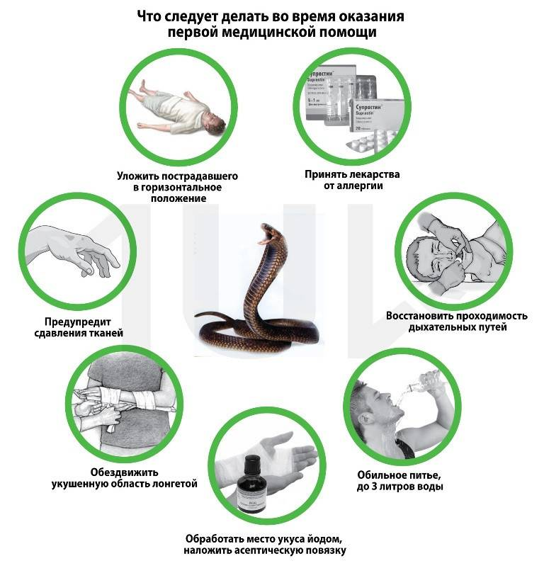 Правила поведения при укусах змей   гбуз республики крым