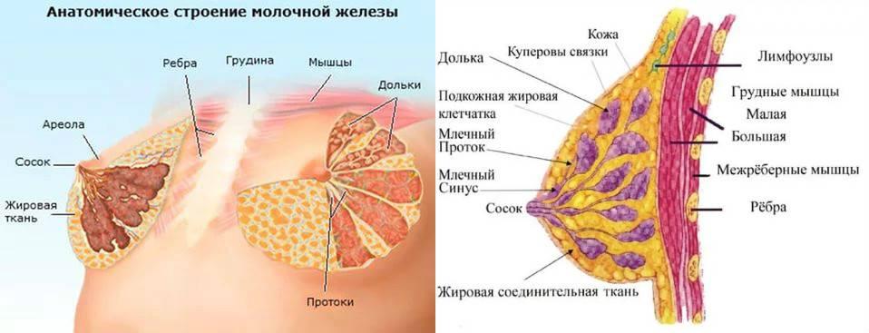 Длительное грудное вскармливание: аргументы за и против |nutrilak