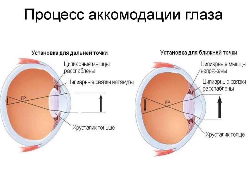Писчий спазм (фокальная дистония кисти)